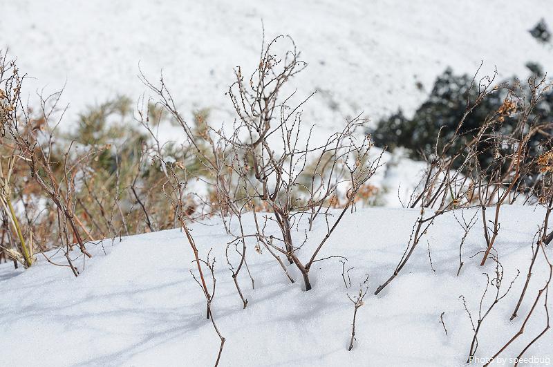 合歡山,武嶺,雪,合歡雪景,合歡武嶺