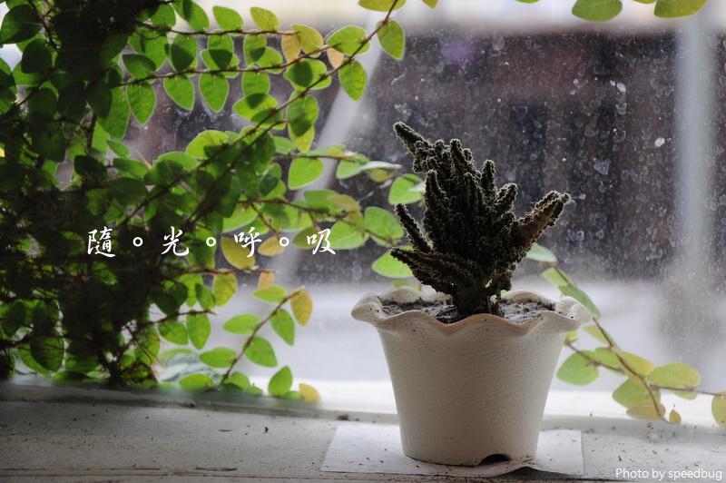 【台南中西】Green Atman 隨光呼吸 (已歇業)