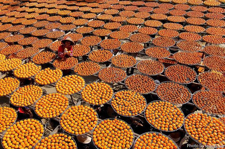今日熱門文章:新竹新埔|味衛佳柿餅觀光農場.曬柿餅熱門攝影景點