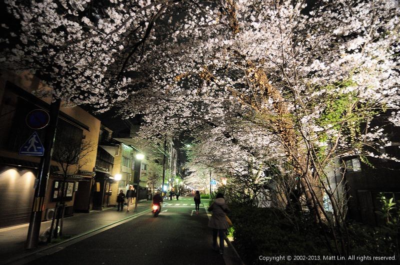 【日本|關西|京都】木屋町通高瀨川.延綿不絕的粉白夜櫻