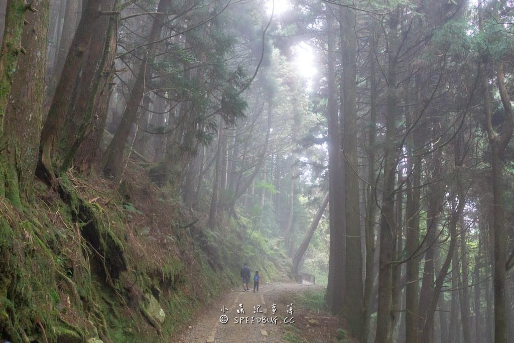 特富野古道,特富野,阿里山,塔塔加,森林步道,鍵行,舊鐵道,水山線,水山支線,自忠