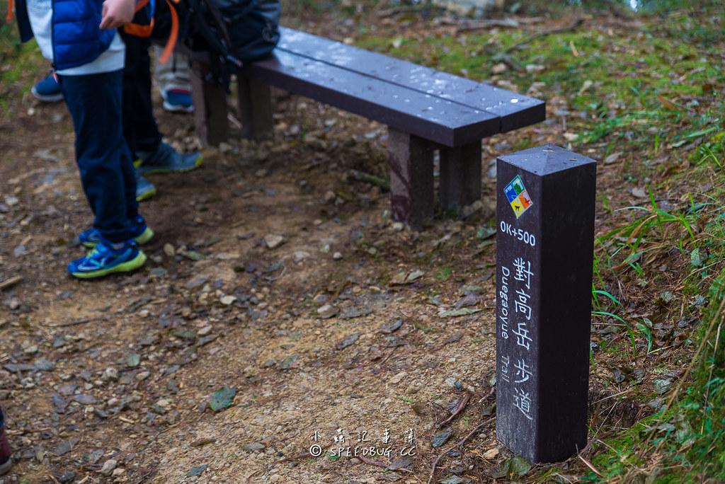對高岳.對高岳越嶺步道,對高岳步道,對高岳登山步道,對高亭,紅榨槭,阿里山紅葉,阿里山楓葉,祝山林道,祝山觀日步道