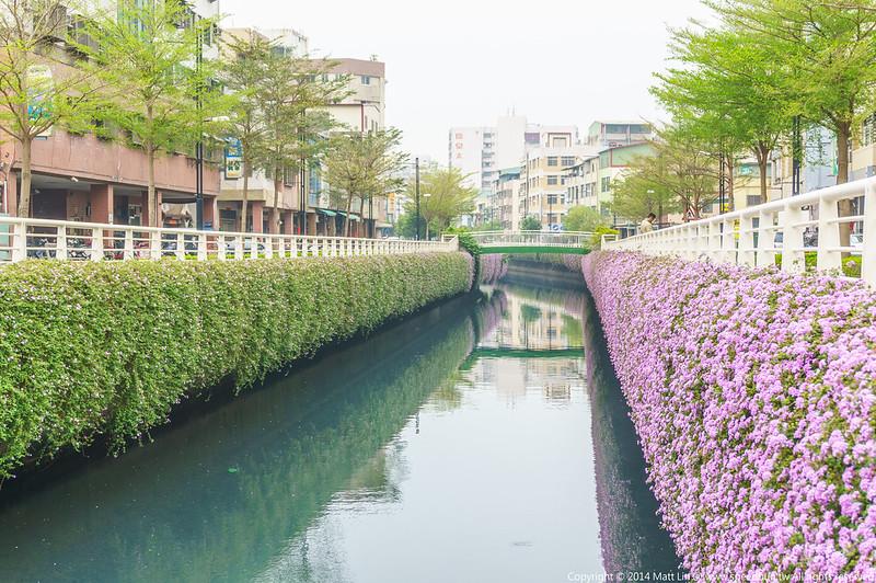 高雄,幸福川,紫花馬櫻丹