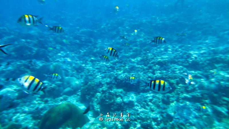 台東,綠島,柴口浮潛區,柴口浮潛,綠島浮潛,綠島玩水,潛水,綠島必玩行程
