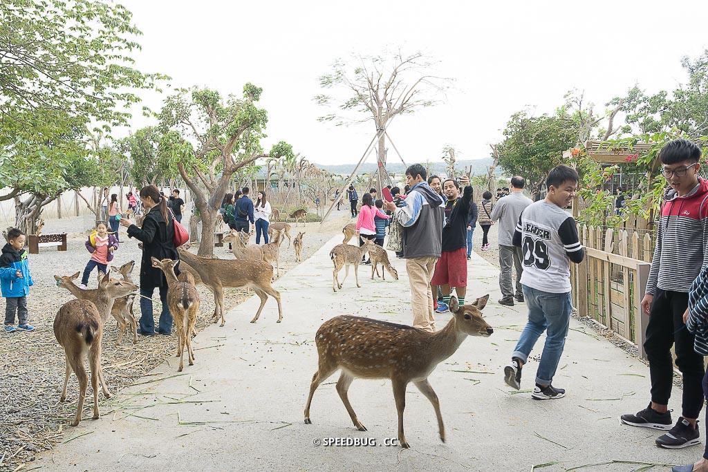 【屏東】恆春墾丁旅遊景點.不用到奈良也可以被小鹿圍繞.鹿境梅花鹿生態園區 Paradise Of Deer