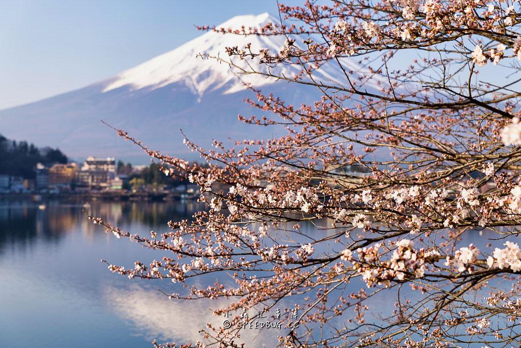 逆富士,逆さ富士,富士山,河口湖,山梨.富士山河口湖.富士山倒影,fuji,Upside down Fuji,Inverted Fuji,mt fuji