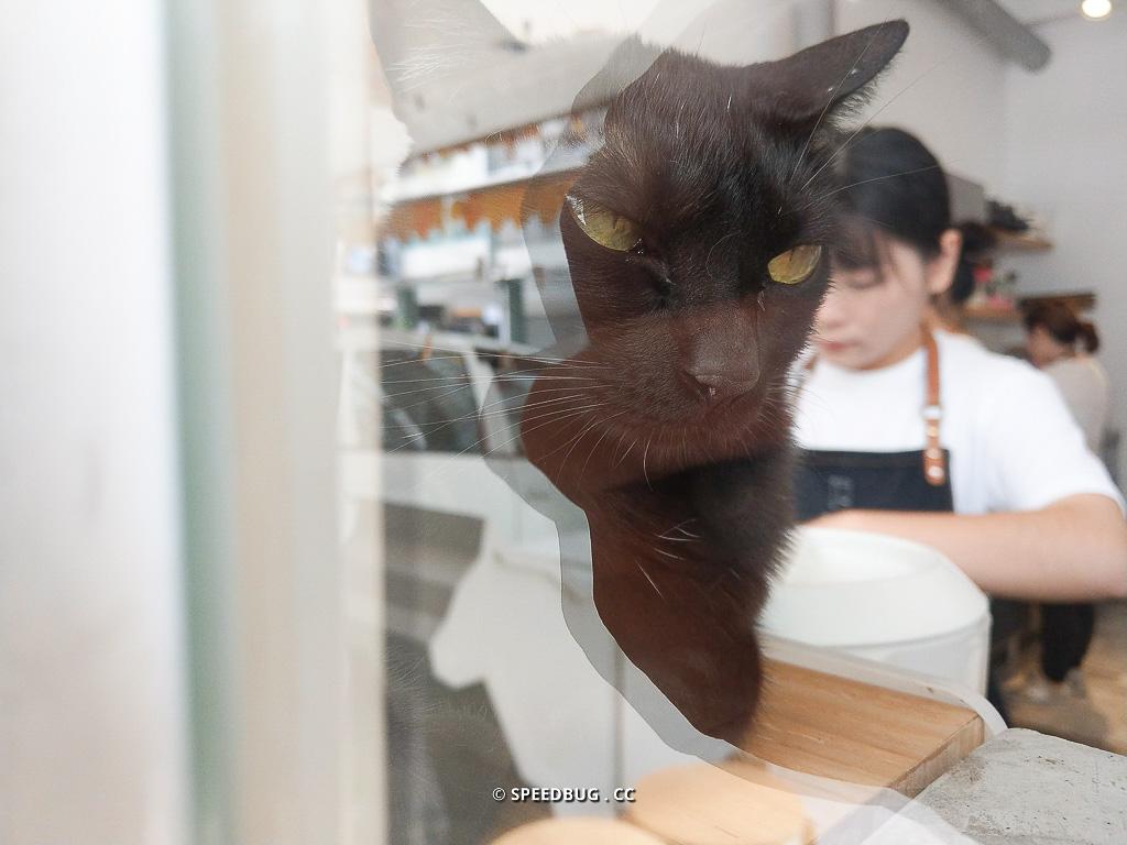 高雄,美食,高雄美食,貓,貓餐廳,高雄貓餐廳,cat